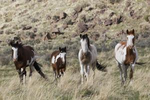 Wild Horses, Family Group by Ken Archer