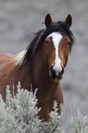 Wild Horses, Steens Mountains