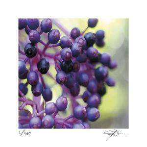Berries 2 by Ken Bremer