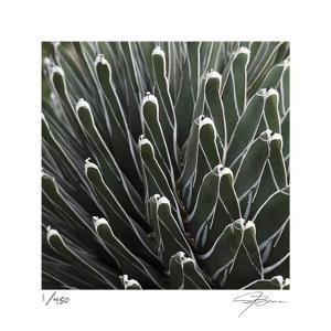Cactus 34 by Ken Bremer