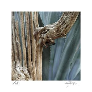 Cactus Skeleton by Ken Bremer