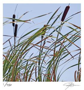 Cat Tails by Ken Bremer