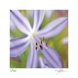 Flower Center by Ken Bremer
