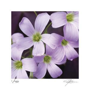 Flower Closeup by Ken Bremer
