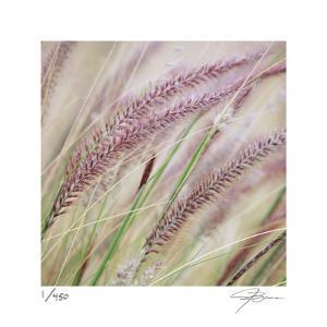 Fountain Grass 7 by Ken Bremer