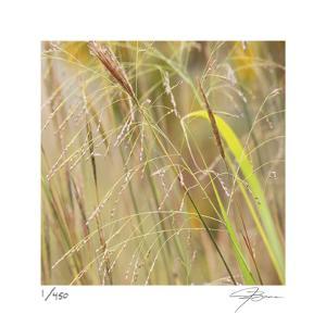 Grass 38 by Ken Bremer