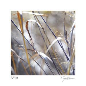 Grass 9 by Ken Bremer