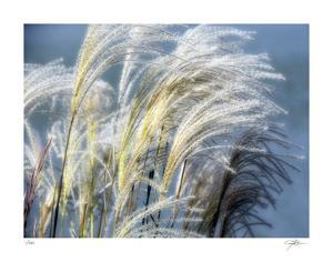 Grass Diptych Right by Ken Bremer