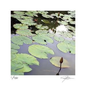 Lily Pads by Ken Bremer