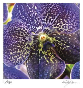 Orchid Square by Ken Bremer