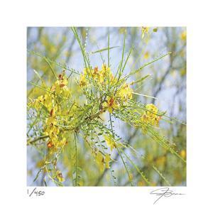 Palo Verde by Ken Bremer