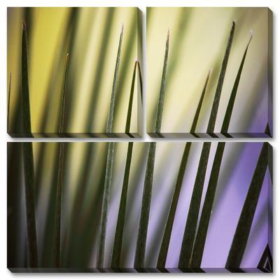 Tropical Fan 2 by Ken Bremer