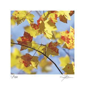 Yellow Oak Leaves by Ken Bremer