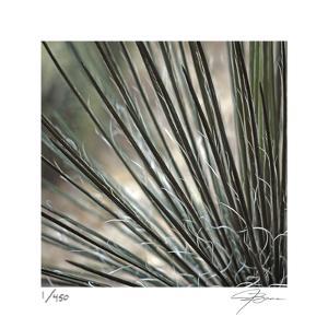 Yucca 12 by Ken Bremer