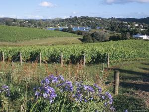 Vineyards, Ostend, Waiheke Island, Hauraki Gulf, North Island, New Zealand by Ken Gillham