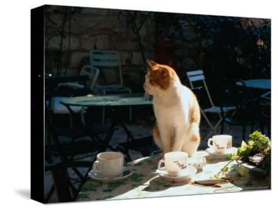Cat on Table at a Cafe, Paris, FR