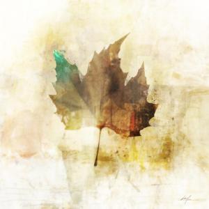 Falling Maple Leaf 1 by Ken Roko