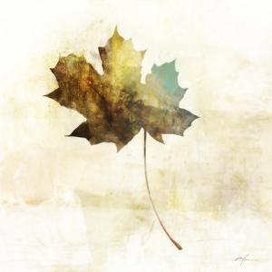 Falling Maple Leaf 2 by Ken Roko