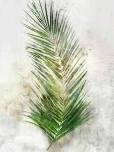 Textured Areca Palm by Ken Roko