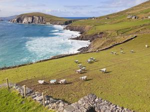 Near Slea Head, Dingle Peninsula, Ireland by Ken Welsh