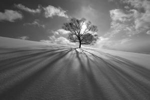 Tree Shadow by Kengo Shibutani