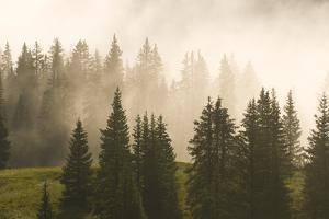 Fog and Fir Trees on Molas Pass, San Juan National Forest, Silverton, Colorado. by Kennan Harvey