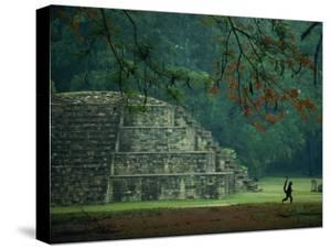 A Monkey Who Lives at the Site Walks Past a Mayan Ruin at Copan by Kenneth Garrett