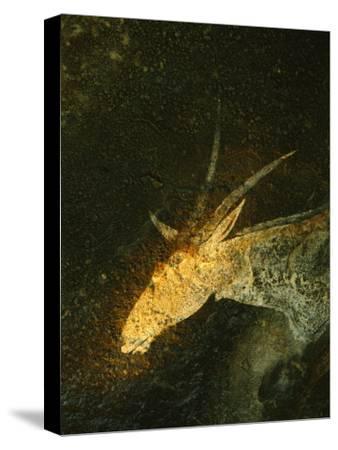 A San Mural Painting of an Eland, an Animal Sacred to the San