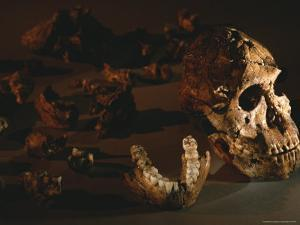 A Two-Million-Year-Old Fossil of Australopithecus Robustus by Kenneth Garrett