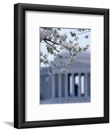 Closeup of Cherry Blossoms with Jefferson Memorial, Washington, D.C.