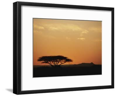 Twilight View of a Lone Tree on the Savanna
