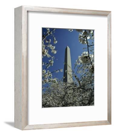 Washington Monument Seen Through Cherry Blossom Trees, Washington, D.C.