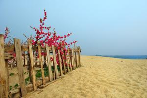 Fence, Sand Dunes and Flower in Seaside by kenny001