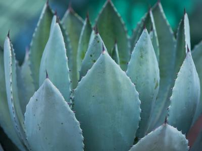 Macro of Succulent Plant in the Desert by kenny001