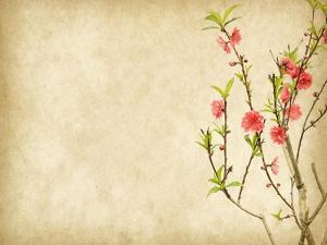 Spring Peach Blossom on Old Antique Vintage Paper Background by kenny001