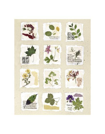 Kent Garden Fragments-Annabel Hewitt-Art Print