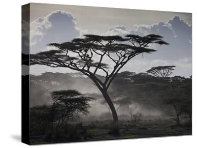 Clouds, African Trees and Dust on Tanzania's Serengeti Plain