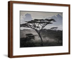 Clouds, African Trees and Dust on Tanzania's Serengeti Plain by Kent Kobersteen