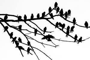 Silhouette of Birds Perched on the Branches of a Dead Tree Above the Occoquan River by Kent Kobersteen