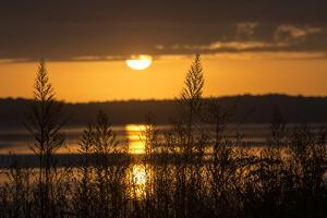 Silhouetted Grasses Along the Occoquan River, Looking Toward Mason Neck, at Sunrise by Kent Kobersteen