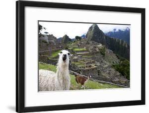 The Ruins At Machu Picchu and a Couple of Llamas by Kent Kobersteen