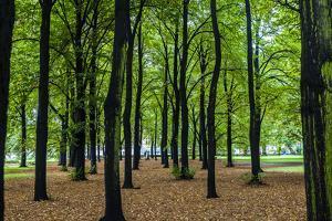 Trees on an Early Autumn Day in Ogrod Saski, or Saxon Garden by Kent Kobersteen