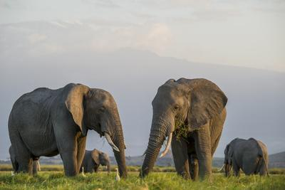 https://imgc.artprintimages.com/img/print/kenya-amboseli-national-park-elephant_u-l-pypdv10.jpg?p=0