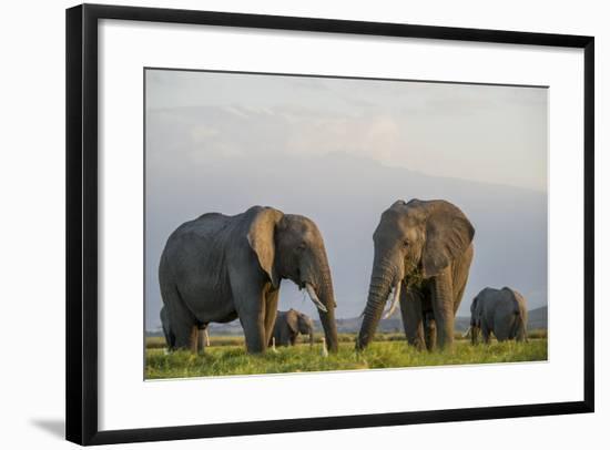 Kenya, Amboseli National Park, Elephant-Alison Jones-Framed Photographic Print
