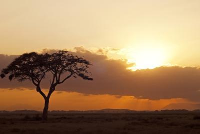 Kenya, Amboseli National Park, Lonely Tree at Sunset-Anthony Asael-Photographic Print