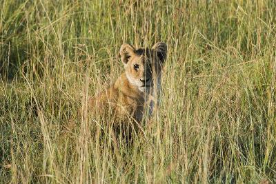 Kenya, Maasai Mara, Mara Triangle, Mara River Basin, Lion Cubs-Alison Jones-Photographic Print