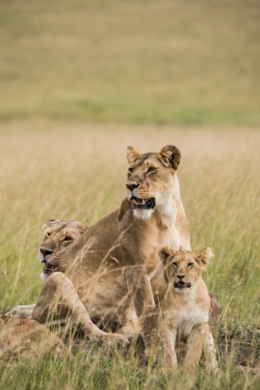 Kenya, Maasai Mara, Mara Triangle, Mara River Basin, Lioness with Cubs-Alison Jones-Photographic Print
