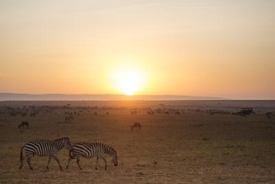 Kenya, Mara North Conservancy. Plains Game Graze in Morning Light, Mara North Conservancy-Niels Van Gijn-Photographic Print