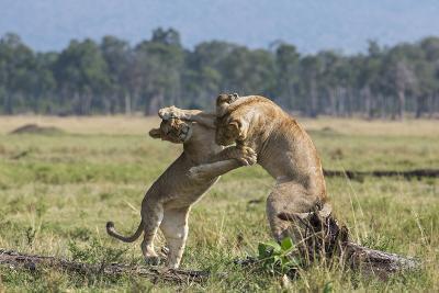 Kenya, Masai Mara-Nigel Pavitt-Photographic Print