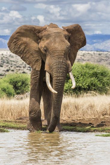 Kenya, Meru County, Lewa Conservancy. a Bull Elephant at a Waterhole.-Nigel Pavitt-Photographic Print